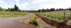 Clos Electrique at Cameron Winery, looking down the drive