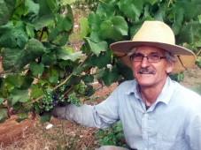Veraison, August 29 at Clos Electrique Vineyard
