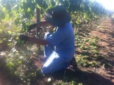 Dave drops crop