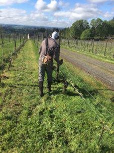hand mowing the vine row